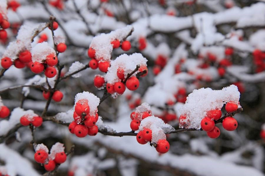 Iarna vazuta din gradinile ansamblurilor rezidentiale Good Residence